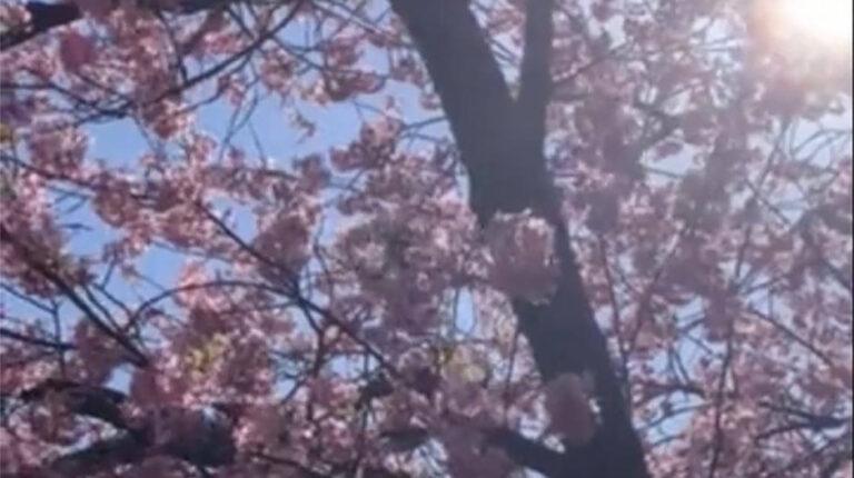 【yukiko】SPAブログ*春はデトックス1*